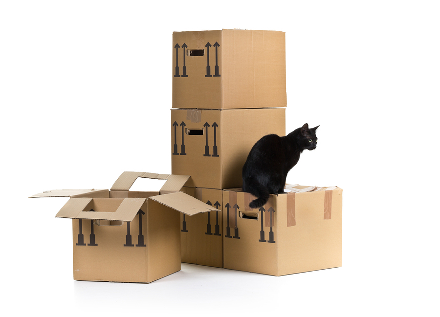 Conseils pour un déménagement avec chat