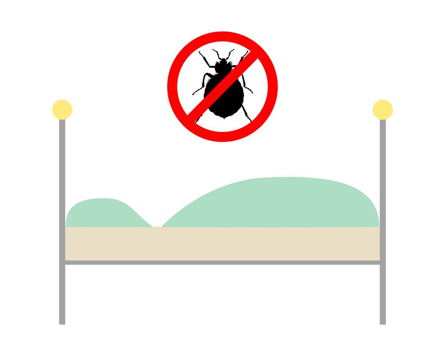 Punaises de lit et déménagement dans la région de Montréal